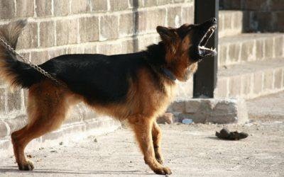 Hundeabwehr: So verteidigt ihr euch gegen einen Hundeangriff